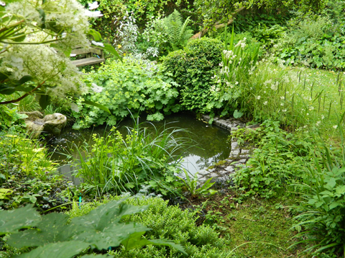 Recent garden photos elemental landscape design alex for Wildlife pond design uk